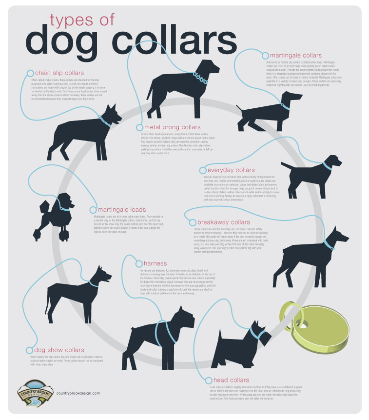 What Are The Different Types Of Dog Collars